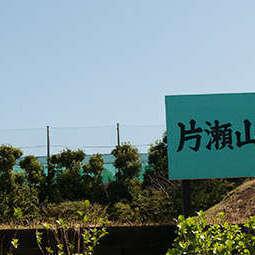 片瀬山テニスクラブ