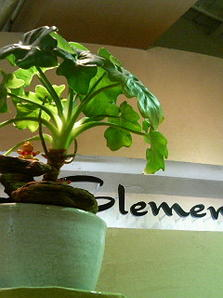Elements Hair Total Produce