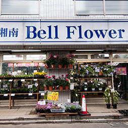 Shonan Bell Flower